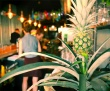 Top Caribbean restaurants\'s photo